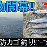 青物開幕!、カゴ釣りでサバが釣れました!!。小春日和の大堤防に、青物が回遊していました(^^)。2021,3月下旬in駿河湾