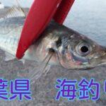 「2021年4月」千葉県 海釣り いろいろな場所に行って来ました