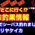 【4月23日配信】東京湾、房総、常磐、海釣り公園の釣果情報。シリヤケイカ好調。埼玉小場所で明暗シーバス釣れました。