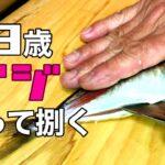 【船釣り】63歳じじい、アジ釣って捌く