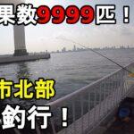 【大黒ふ頭西緑地】釣果数9999匹!?3月下旬にイワシの釣果数がカンストした神奈川県横浜市北部にある海釣り施設の近くにある釣り場で釣りしてみたら…【2021.03.26】