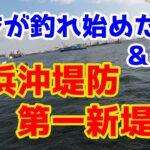 【横浜沖堤防 第一新堤】アジが釣れ始めてきたので調査してきました I caught horse mackerel and squid in Yokohama