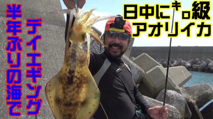 【釣り】Vol.05 半年ぶりの海!デイエギングで春の良型アオリイカを狙う! 【エギング】【春イカ】