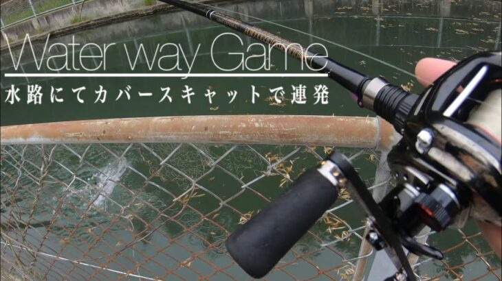 【春のバス釣り】水路にてカバースキャットで連発
