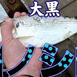 横浜港の大黒ふ頭でサビキ釣り【大黒海づり施設】