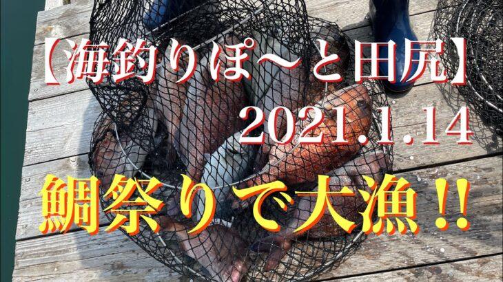 【海釣りぽ〜と田尻】鯛祭りで大漁