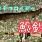 [ナマズ釣り] ニチニチフロイジー釣りよかカラーでビックバイト!