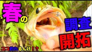 【バス釣り】春爆!爆釣!言うてるけど!ホントの所どうなん?野池のリアルをお届けします。