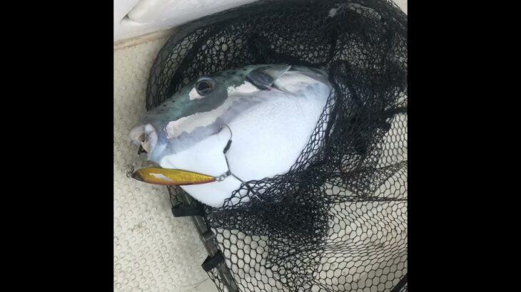 奄美大島観光 船釣りツアー 初心者歓迎 ジギング 猛毒フグはリリース