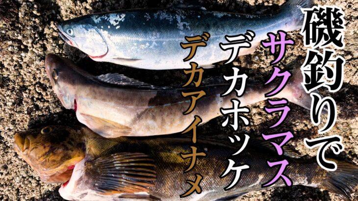 【積丹・神恵内】磯釣りでサクラマス。大物しか釣れない磯発見👀