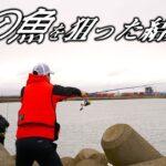 【投げ釣り】苫小牧で旬の魚を狙った結果…【海釣り】