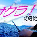 【海釣り】鱗が落ちてる磯でサクラマスを狙う!