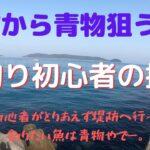 【青物】海釣り初心者の挑戦!堤防の青物狙い編【挑戦】