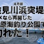 【釣り編】検見川浜ダメなら市原海釣り公園での釣果