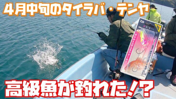 【ボート釣り】4月中旬のタイラバ・テンヤ 高級魚が釣れた!?