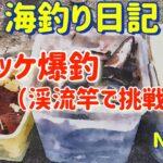 【焼尻島の海釣り】漁港内でホッケ爆釣【海釣り日記8】