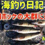 【焼尻島の海釣り】ホッケの大群に遭遇【海釣り日記9】