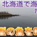 北海道で海釣りをしようの旅3 良型の魚GETの巻