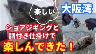 【貝塚港海釣り】ショアジギングと胴付き仕掛けで釣り
