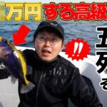 【海釣り】釣りの聖地五島列島での昇給試験開幕!!五島ならでの奇跡が・・・!!