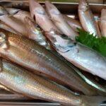 【東京湾】砂浜の女王!東京湾奥のシロギス釣り【船釣り】