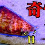 寄生○のような貝を食べてみると・・・