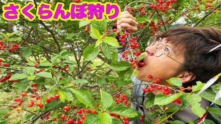 大量に実っている自宅の木の実でジャム作ったら…!