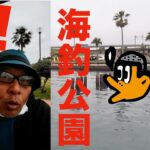 [初心者釣り日記] 梅雨空の浜名湖新居海釣り公園で勝手に希望を感じる初心者