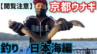 京都ウナギ釣り【閲覧注意】日本海編