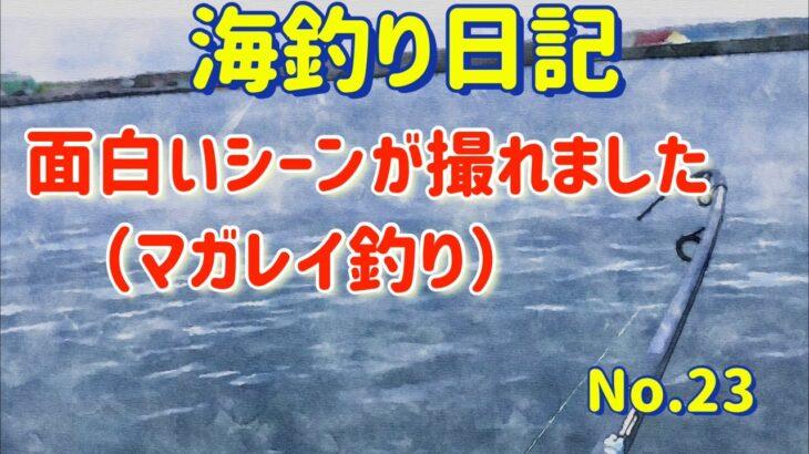 【焼尻島の海釣り】面白いシーンが撮れた【海釣り日記23】