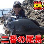 超A級磯!鵜来島、水島二番の尾長グレ釣り!!!
