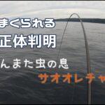 【船釣り】令和三年六月六日 若潮釣行 切られまくる魚の正体判明Boat fishing【フカセ】