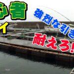 GO!GO!九ちゃんフィッシング #425 「美人ゲストと海上釣り堀(前篇)小島みゆがマダイ釣りに挑戦!」