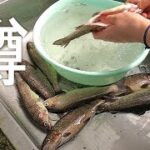 ニジマス釣って食う!!in 皇子原公園。