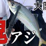 【大阪湾釣り】40cm!鬼アジ狙ってワイワイフィッシング【サビキ】