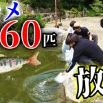 蘇った池に大量のヤマメを放流して釣りしてみた!