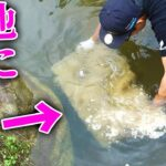 【山復興】復活したキレイな池に何を沈めてるの??