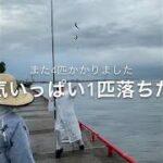 鳴尾浜海釣り公園 鯖爆釣れ