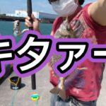 海釣り!石垣鯛、小鯖を釣りました!  #海釣り  #トリック  #石垣鯛  #小鯖