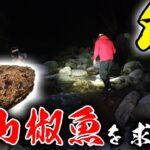【山復興】佐賀に居ないはずの天然記念物オオサンショウウオを探す!
