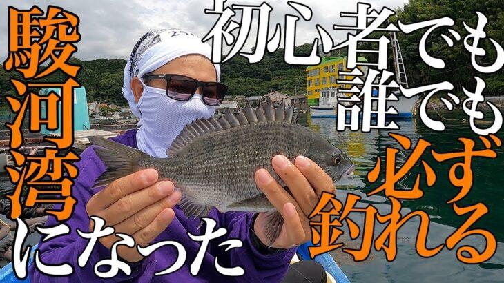 かかり釣り💕簡単初心者でも黒鯛からさまざまな魚種が豊富に釣れる駿河湾での釣り🎣チヌ・シーバス・ブリ・カンパチ 静岡県沼津市 ダゴチン 筏釣り