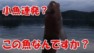 【釣行2日目】小魚に遊んでもらった【海釣り】【宮城県気仙沼】