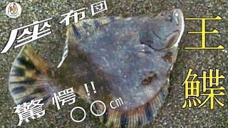 【北海道 海釣り】幻妖のモンスター座布団級 王鰈(マツカワ)を狙え!!えりも方面のサーフで投げ釣り/ブッコミ釣り