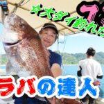 イカタコカーリーで大ダイ釣れたよ~!達人が使う鯛ラバはコレ!!~兵庫・淡路島沖~