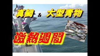 """【海釣り情報  船釣り情報】""""激熱週間""""突入!後半戦"""