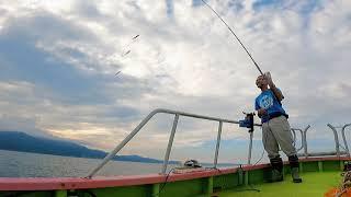 25・サビキ(豆小サバ)【海釣り】【船釣り】