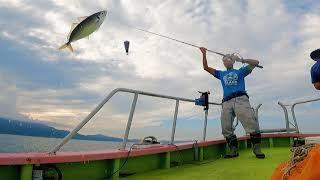 24・サビキ 尺アジぶち抜き(大アジ)【海釣り】【船釣り】