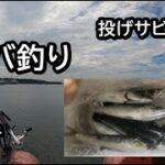 【 サバ 】海に食料を釣りに行った【 海釣り 】