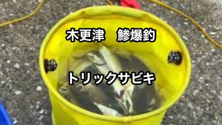 爆釣鯵 木更津海釣り 【2021 9 14】
