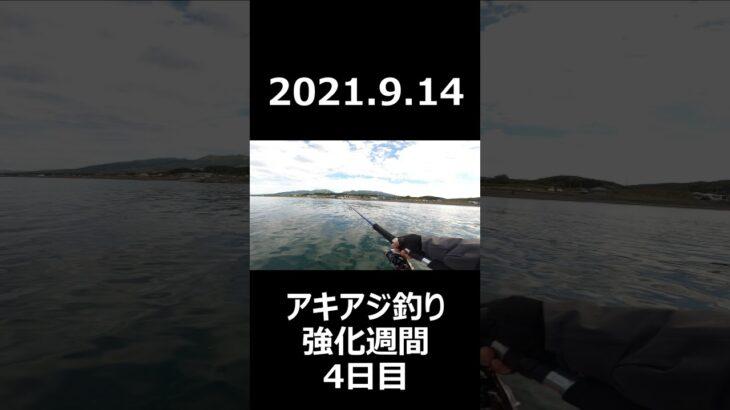 【週末アングラーの釣行日記2021番外編№12】2021.9.14アキアジ釣り強化週間4日目。アキアジの船フカセ釣りに初挑戦!ド素人がやるとこんなもんですよ。#Shorts
